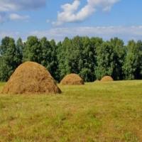 Омской области не удастся запастись сеном в достаточном количестве