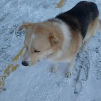 К 1 марта 300 омских бродячих собак должны умертвить