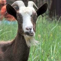 Покупатель коз вошел в доверие омички и снял с ее карты 37 тысяч рублей