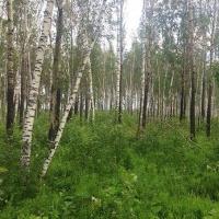 В Омской области продолжается учет и изучение лесного фонда