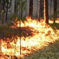 В Омской области на защиту лесов от пожаров выделят 68 миллионов рублей