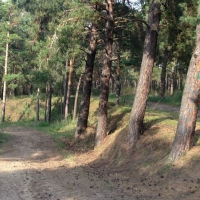 Главный лесничий Омской области прикрыл своего приятеля, незаконно порубившего 58 сосен