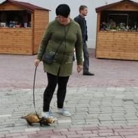 Хорек на поводке посетил День омича