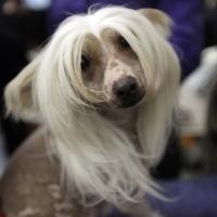 В Омске пройдёт костюмированный бал собак