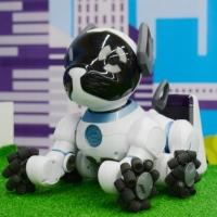 Самые крутые роботы планеты прибыли в Омск