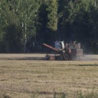 В Омской области убрано 93% зерновых площадей
