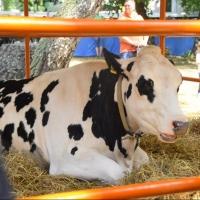 Омская область может накормить мясом дополнительно 2,2 миллиона человек