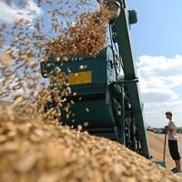 Омское зерно отправили в Саудовскую Аравию