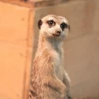 Обитатели Большереченского зоопарка ждут лайков