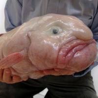 Древнюю рыбу, найденную в Сибири, ученые назвали предком человека