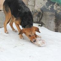 В Омске все больше жертвами догхантеров становятся добрые домашние собаки