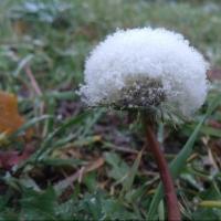 Снег с дождем прогнозируют омские синоптики