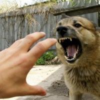 В Омске собака укусила своих хозяев
