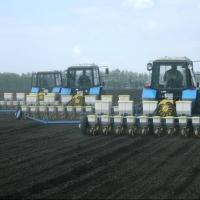 В Омской области пшеница не прорастает и тракторы тонут на полях