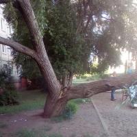 В центральном округе Омска на ребёнка упало дерево