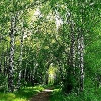 Омская прокуратура внесла представление ООО «Большеатмасское» за лесные пожары