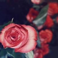 Омич заказал в интернете 101 розу для своей жены, но остался без денег и букета