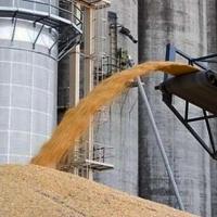 В Омской области нарастят мощности для хранения зерна