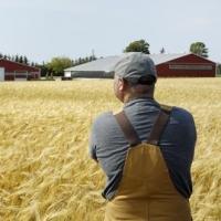 Фермеров Таврического района привлекают на городские рынки