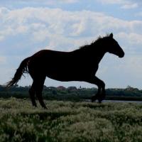 В пяти поселках Омской области объявили карантин из-за болезни лошадей