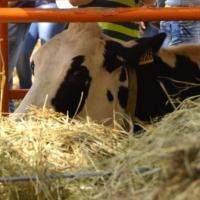 В омском регионе животноводы готовят резервные электроустановки и калорийно кормят скот