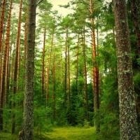 В Омской области существенно упали объемы лесозаготовок
