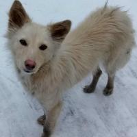 Пенсионеры из омского интерната позаботились о судьбе истощенной собаки