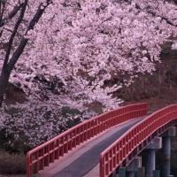 Что посмотреть в Японии?