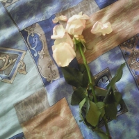 В омском магазине цветов 9-летнему джентльмену подсунули несвежую розу