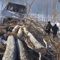 Бурков назвал причину активности «черных лесорубов» в Омской области