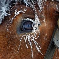 В Омске у ипподрома бросили «Газель» с лошадьми и жеребенком
