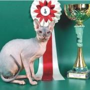 Распространенные нарушения на выставках кошек.