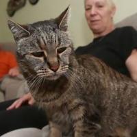 Самый старый в мире кот дожил до 32 лет и умер