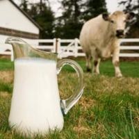 Омские коровы в кризис стали давать больше молока