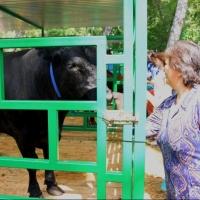 На реализацию сельскохозяйственных проектов в Омской области привлекли 2,8 миллиарда рублей