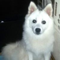 Неизвестный омич на тонированном ВАЗе похитил белую собаку