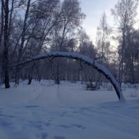 В Омской области лесоруба задавило деревом