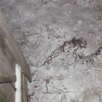 Житель Омской области похитил и убил чужую собаку