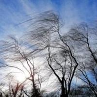 В Омскую область к 23 февраля придет мороз и порывистый ветер