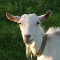 Омская предпринимательница получила два миллиона за несуществующий скот