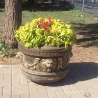 Глав округов Омска планируют наделить новыми полномочиями