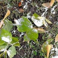 Сентябрь в Омской области начнется с заморозков