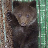 Маленькая медведица из Большереченского зоопарка выбрала себе имя