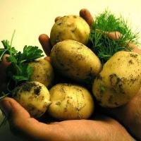 Омские овощи продают в 139 магазинах