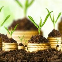 Инвестору на заметку: как не ошибиться с выбором МФО?