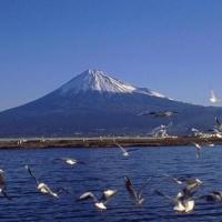 У берегов Японии зафиксировано серьезное землетрясение