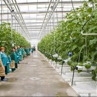 20 инвестиционных проектов начинают работать на возрождение омского села