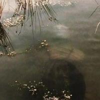 19-летний житель Омской области убил девушку и спрятал труп в болоте