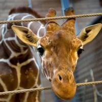 В День защиты детей Большереченский зоопарк станет бесплатным