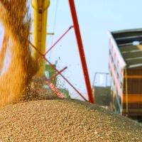 Омской области увеличат лимит перевозок зерна по льготным тарифам